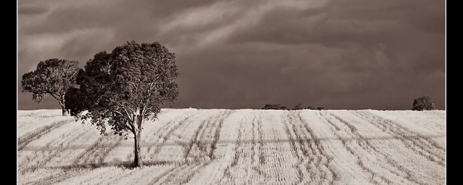 An Australian Landscape by sachman licensed Creative Commons